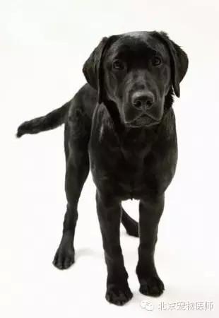 常见的宠物狗狗品种及图片