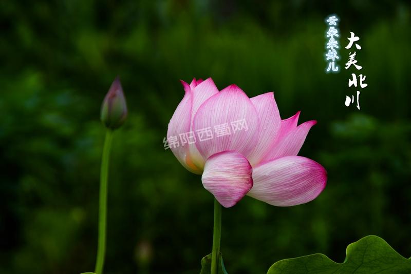 DSC_0367 精选.jpg