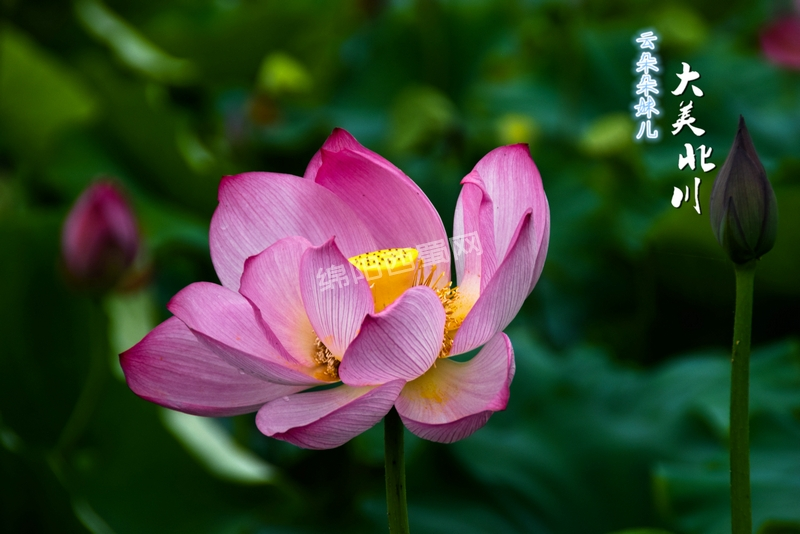 DSC_0414 精选.jpg