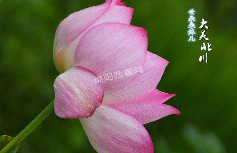 DSC_0367 精选-2.jpg